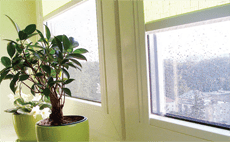 герметичное окно с цветком и дождь